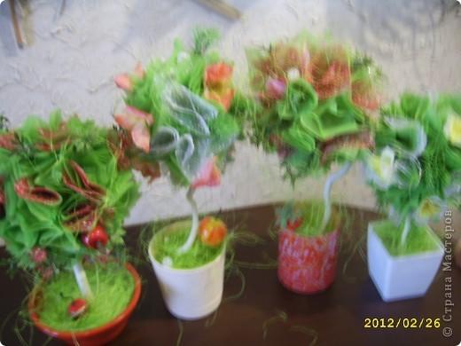 Мои топиарии!))))) Вишневое деревце фото 5