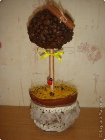 мое первое кофейное дерево)))