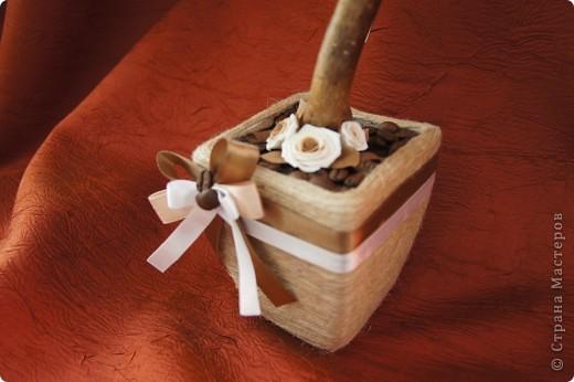 Кофейные деревца со сливочными розочками фото 6