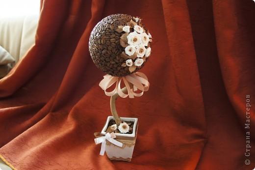 Кофейные деревца со сливочными розочками фото 3