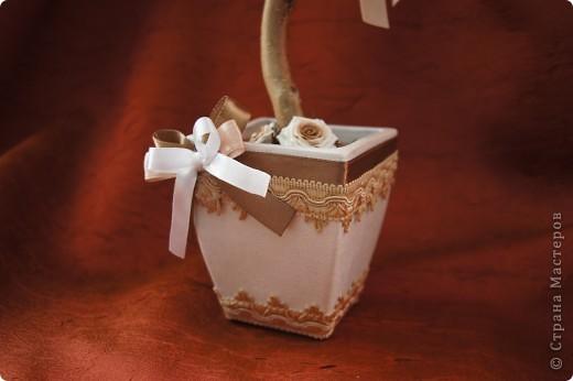 Кофейные деревца со сливочными розочками фото 7