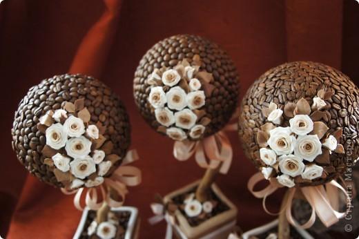 Кофейные деревца со сливочными розочками фото 2