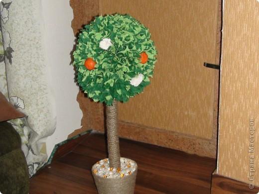 Моё апельсиновое деревце)))