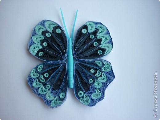 Моя первая бабочка в технике квиллинг.