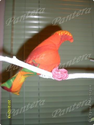 Сегодня ко мне прилетели птички, расселись на веточку и радуют меня своей пестрой расцветкой. Видимо из за нее муж с сыном называют их попугаями :))) Но я вас уверяю,это точно не попугаи!!! Просто у этих птичек своя миссия - радовать глаз и повышать настроение   фото 3