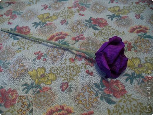 """Моя первая """"конфетная"""" роза фото 1"""
