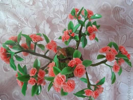 Фотографий просмотрела много,бонсаи делают из кустарниковых азалий,а они  пятилепестковые,а не как у меня,у нас продают  с такими цветами комнатные.Но ,оказывается и из комнатных выращивают бонсай.Ориентировалась на работу SVET1301.Слепила 72 цветочка-бутончика и столько же листочков,хотя у настоящих лмстьев практически нет,одни цветы,целая шапка(крона) фото 8