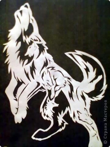 волки. фото 1