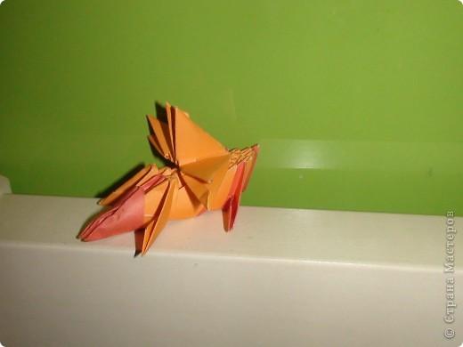 золотая рыбка, фото 3