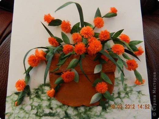 Цветы-Рыжики  фото 1
