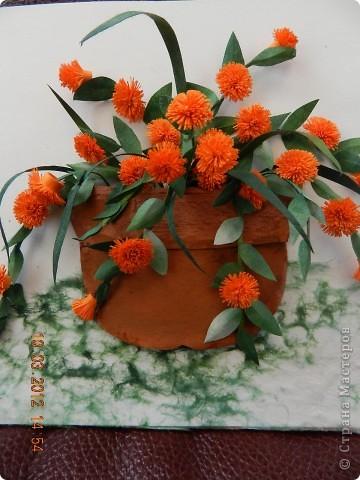 Цветы-Рыжики  фото 2