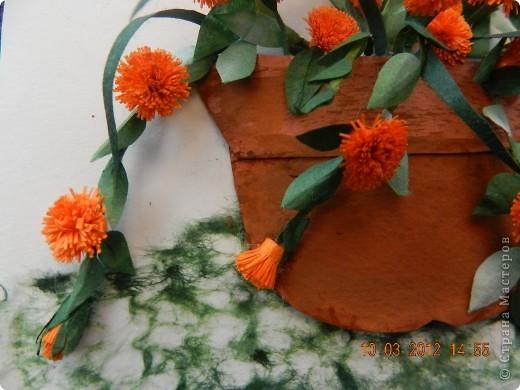Цветы-Рыжики  фото 5