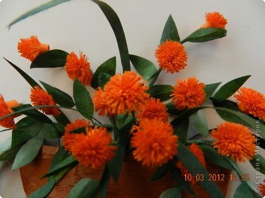Цветы-Рыжики  фото 4