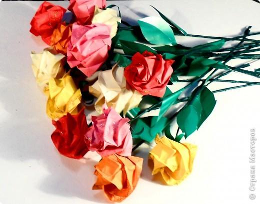 Розы Кавасаки ( 13 шт.)
