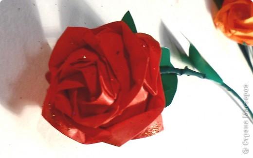 Розы Кавасаки ( 13 шт.) фото 4