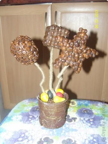 Новые кофейные деревца фото 3