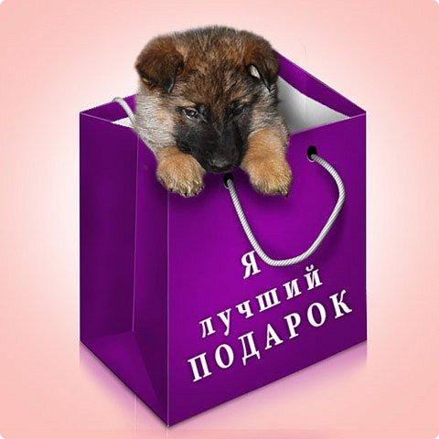 """Бывает """"кот в мешке"""", а может быть и """"собака в сумке""""."""