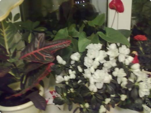 Мои цветы фото 5