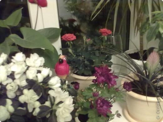 Мои цветы фото 6