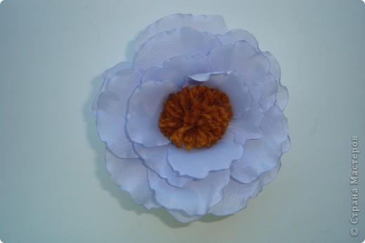 подскажите как можно назвать эти цветочки фото 1