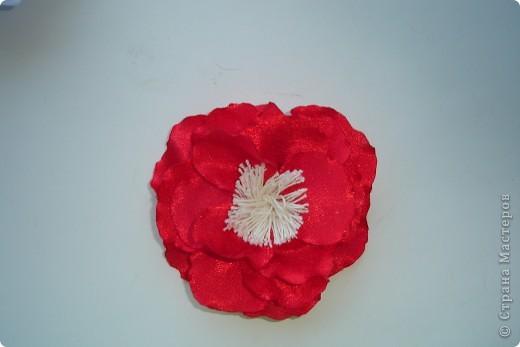 подскажите как можно назвать эти цветочки фото 3