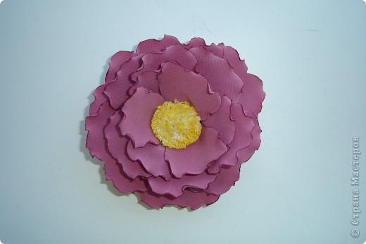 подскажите как можно назвать эти цветочки фото 4