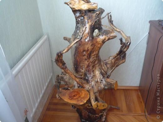Высушенный и обработанный корень многолетнего дерева. фото 2