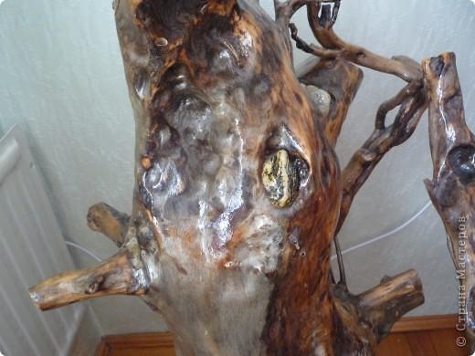 Высушенный и обработанный корень многолетнего дерева. фото 6