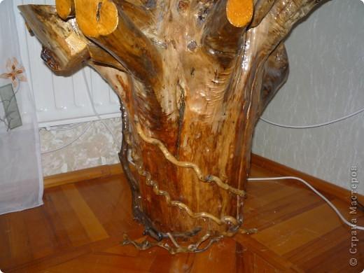 Высушенный и обработанный корень многолетнего дерева. фото 11