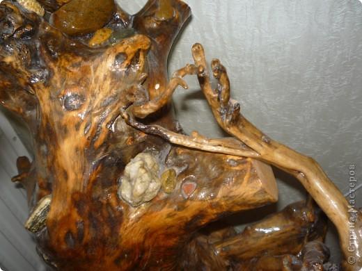 Высушенный и обработанный корень многолетнего дерева. фото 9