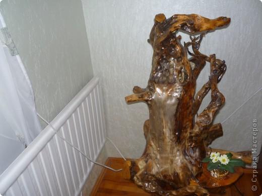 Высушенный и обработанный корень многолетнего дерева. фото 12