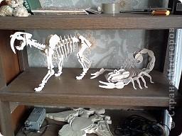 Скорпион и сабака фото 1