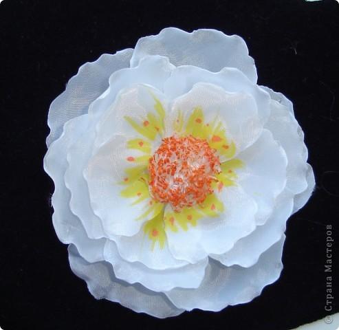 подскажите как можно назвать эти цветочки фото 5