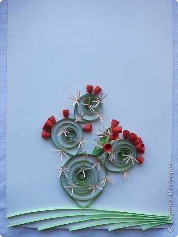 На сей раз представляю Вашему вниманию не гламурные цветочки, а колючий кактус - опунцию. Делала по книге про австралийские садовые растения в квиллинге. фото 2