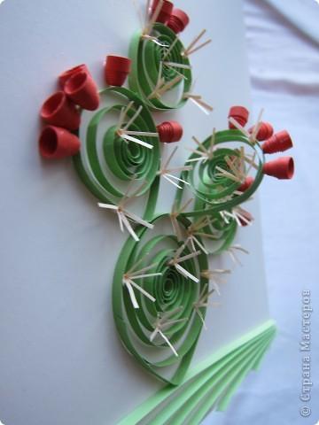 На сей раз представляю Вашему вниманию не гламурные цветочки, а колючий кактус - опунцию. Делала по книге про австралийские садовые растения в квиллинге. фото 6