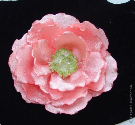 подскажите как можно назвать эти цветочки фото 6