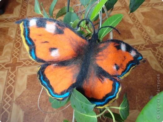 бабочка крапивница из шерсти фото 1