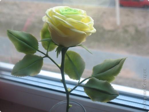 Ещё один цветочек для букета фото 1