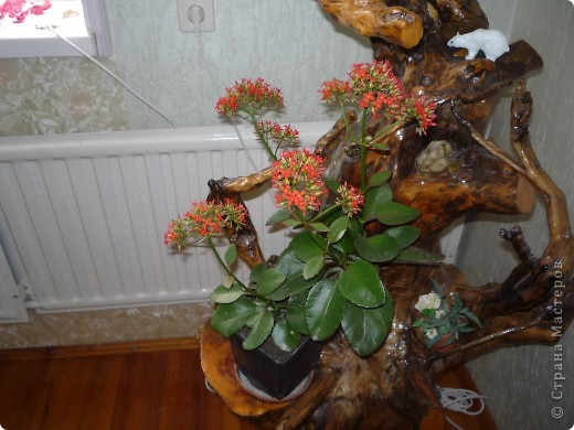Высушенный и обработанный корень многолетнего дерева. фото 19