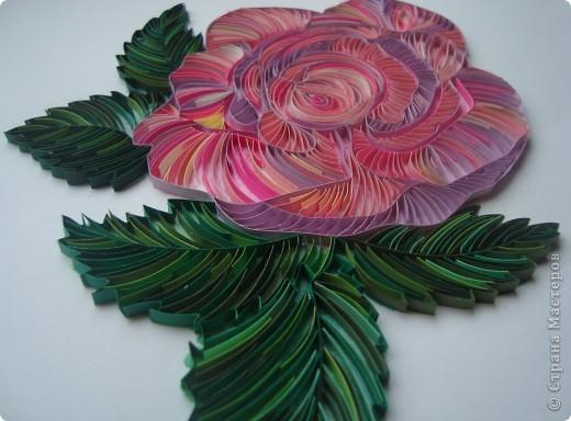 создать красивую розу с