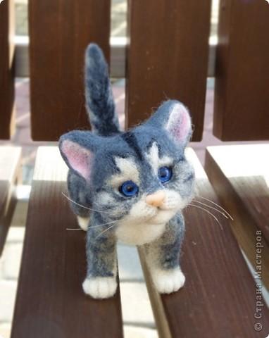 Котёнок фото 3