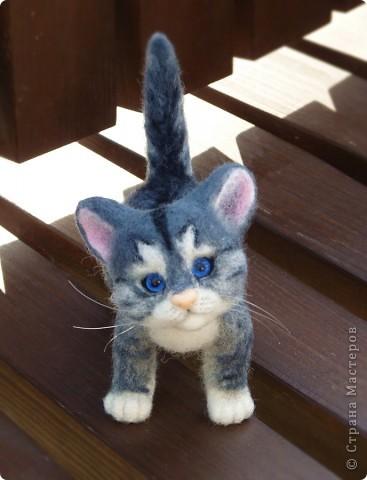 Котёнок фото 4