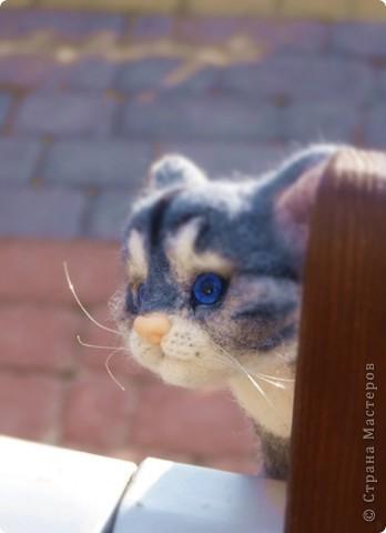 Котёнок фото 1