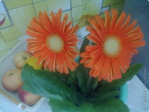 Мои цветы фото 10