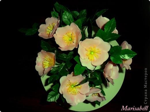 У меня появился вот такой букет из цветущих веток шиповника. фото 3