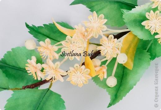 Доброго всем времени суток! наконец-то появилось на небе долгожданное теплое солнышко, местами уже можно порадоваться первым цветочкам мать-и-мачехи. Но в этом году ожидание прихода весны было столь длительным, что захотелось ощутить весеннее цветение как можно скорее. Так и родились две эти работы в технике квиллинга: цветущая яблонька (подроный мк в журнале Diana Креатив, май 2012) и липовая веточка, которыми я и хочу с вами поделиться.