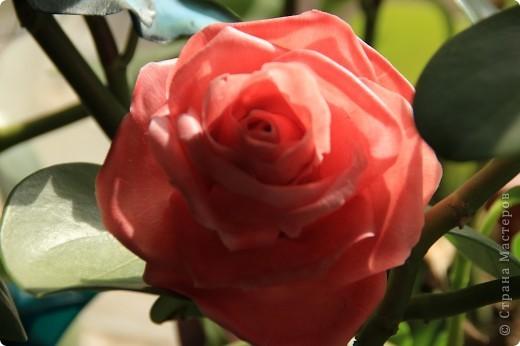 Вот, сделала наконец-то розы в живую величину, я имею ввиду сам бутон, .... стебель пока не обкатала, некогда, листики тоже в процессе, но потом добавлю, что в результате получилось. Дальше разные ракурсы и судить вам))) фото 6