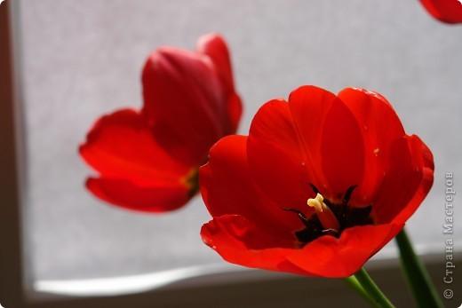 Мастер-класс Материалы и инструменты Лепка МК по форме для сушки лепестков тюльпана Гипс Пластилин Фарфор холодный фото 1
