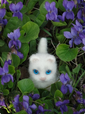 Маленький котенок Сева)))) фото 7