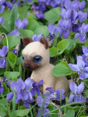 Маленький котенок Сева)))) фото 8